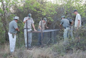 Preparing the trap for the problem Leopard (3)