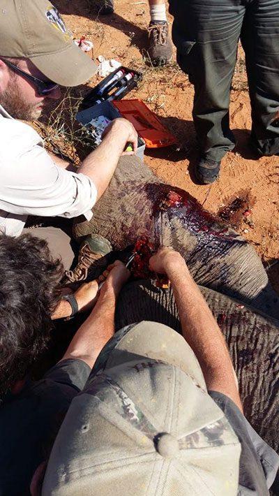 Elephant Snare
