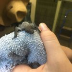 Insect-Eating Bat
